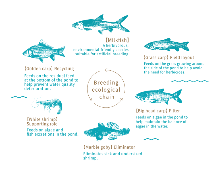 Origin of Milkfish:  Ecological Farming